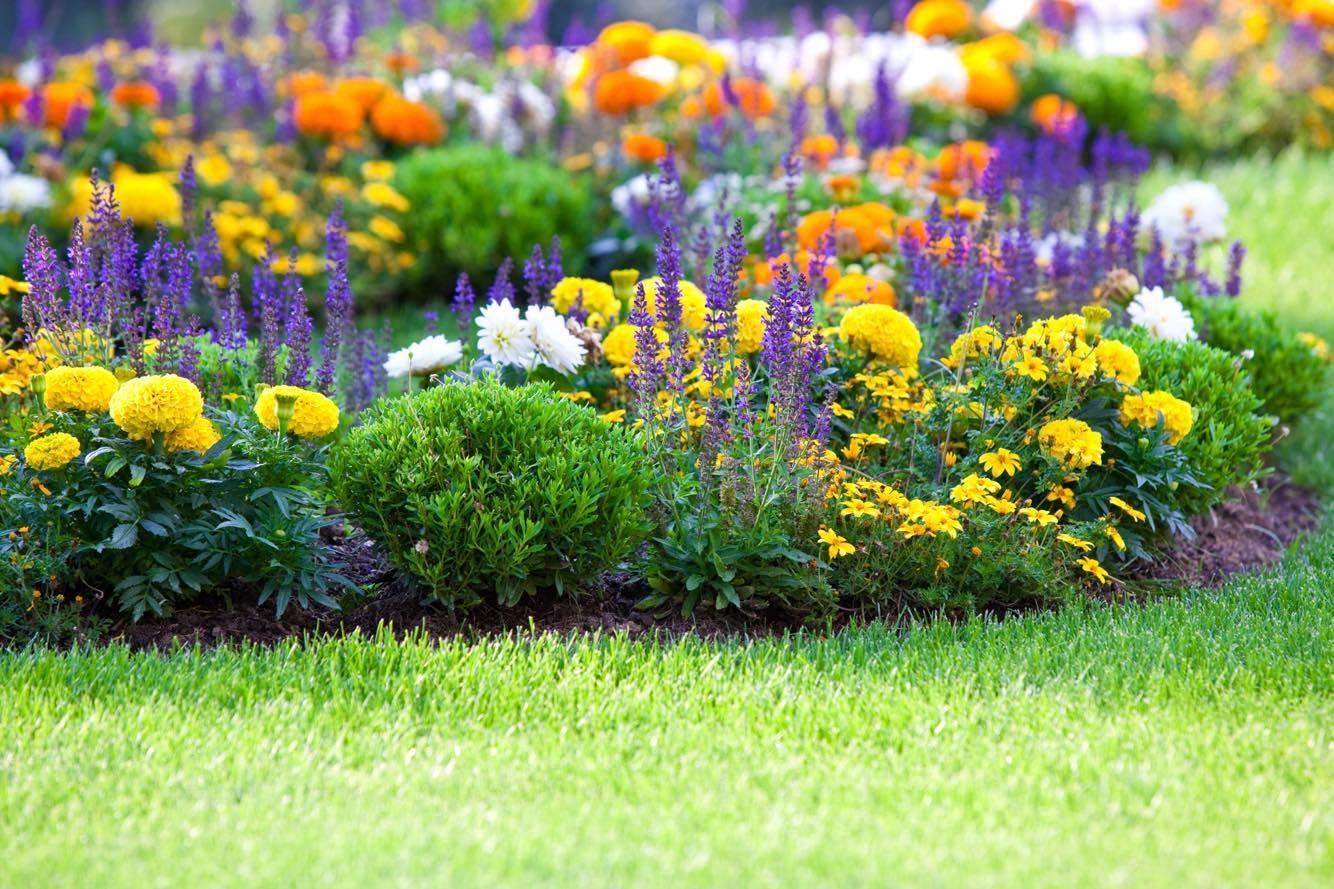 Dārzu ierīkošana un kopšana