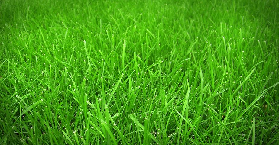 Zāliena un paklājzāliena ierīkošana un pļaušana