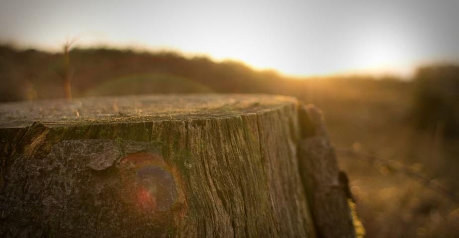 Koku zāģēšana un celmu frēzēšana