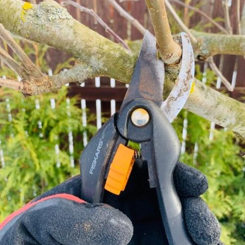 Lapu koku un krūmu kopšana pavasarī - Gardens.lv