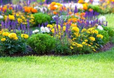 Creating-And-Garden-Care