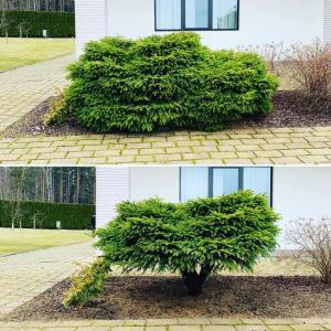 Dekoratīvo stādu formēšana dārzā Gardens.lv