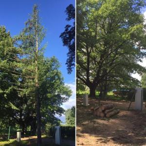Koku zāģēšana, meža attīrīšana no krūmiem