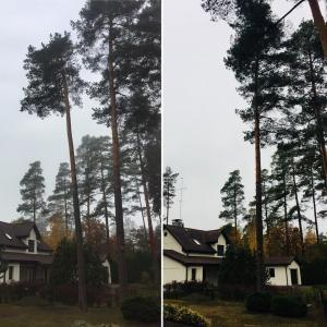 Bīstamo koku zāģēšana Gardens.lv