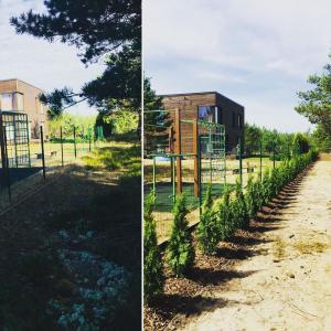 Tūju stādīšana (smaragd) Gardens - skaistākie dārzi
