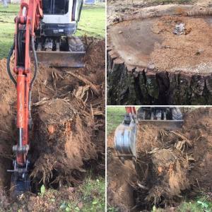 Teritoriju attīrīšana no krūmiem,kokiem,celmiem